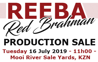 REEBA RED BRAHMAN PRODUCTION SALE